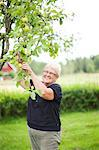 Smiling senior woman picking apples Stock Photo - Premium Royalty-Free, Artist: David & Micha Sheldon, Code: 6102-07158353