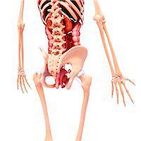 Female anatomy, computer artwork. Stock Photo - Premium Royalty-Freenull, Code: 679-07162982
