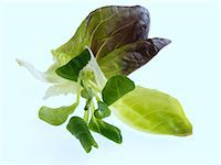 Salad leaves on a white background Stock Photo - Premium Rights-Managednull, Code: 824-07193373