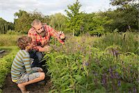 Mature man and son looking at plants on herb farm Stock Photo - Premium Royalty-Freenull, Code: 614-07194756