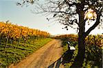 Vineyard Landscape, Ortenau, Baden Wine Route, Baden-Wurttemberg, Germany Stock Photo - Premium Royalty-Free, Artist: Jochen Schlenker, Code: 600-07199399