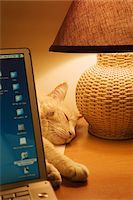 sweet   no people - Cat Asleep on Desk Behind Laptop Computer Stock Photo - Premium Rights-Managednull, Code: 700-07199659