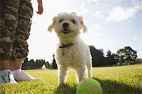 Dog in Park with Tennis Ball Stock Photo - Premium Rights-Managednull, Code: 700-07199676