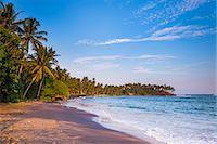 Palm trees, Mirissa Beach, South Coast, Southern Province, Sri Lanka, Asia Stock Photo - Premium Rights-Managednull, Code: 841-07201412