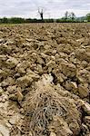 Earth of ploughed field, Wyck Rissington, Gloucestershire, United Kingdom Stock Photo - Premium Rights-Managed, Artist: Robert Harding Images, Code: 841-07201926
