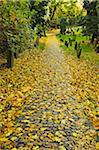 Leaf Covered Path in Autumn, Jewish Cemetery, Worms, Rhineland-Palatinate, Germany Stock Photo - Premium Rights-Managed, Artist: Jochen Schlenker, Code: 700-07202703