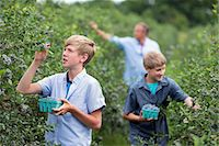 farm and boys - An organic fruit farm. A family picking the berry fruits from the bushes. Stock Photo - Premium Royalty-Freenull, Code: 6118-07203091