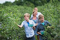 farm and boys - An organic fruit farm. A family picking the berry fruits from the bushes. Stock Photo - Premium Royalty-Freenull, Code: 6118-07203093