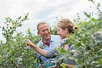 An organic fruit farm. A mature couple picking the berry fruits from the bushes. Stock Photo - Premium Royalty-Freenull, Code: 6118-07203100