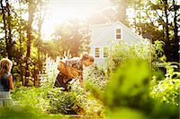 A woman picking vegetables in a garden at the end of the day. A child walking through tall plants. Stock Photo - Premium Royalty-Freenull, Code: 6118-07203932