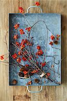 Overhead View of American Bittersweet Vine Dried with Pinecones on Metal Tray as Fall Decor Stock Photo - Premium Royalty-Freenull, Code: 600-07204020