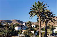 palm - Iglesia de Santa Maria, Betancuria, Fuerteventura, Canary Islands, Spain, Atlantic, Europe Stock Photo - Premium Rights-Managednull, Code: 841-07204611