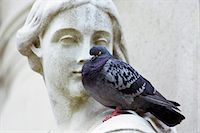 feather  close-up - Pigeon perches on Queen Anne Statue at St Paul's Cathedral in London, England Stock Photo - Premium Rights-Managednull, Code: 841-07204881