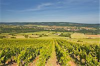 Vineyards above the village of Asquin in the Yonne area of Burgundy, France, Europe Stock Photo - Premium Rights-Managednull, Code: 841-07206549