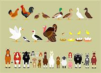 Cute Cartoon Farm Animal Characters including Birds (Hen, Rooster, Brown Quails, Mallard Ducks, Domestic Ducks, Goose, Pigeon, Muscovy Duck, Turkey, also Baby and the eggs of Quail, Chicken, Duck, and Goose) and Mammals in Front View version (Sheep, Llama, Donkey, Goat, Alpaca, Pig, Horse, Cow, Mule, Calf, Cow, Buffalo, Great Dane Dog, German Shepherd Dog, Cat, Hare, and Rabbit) Stock Photo - Royalty-Freenull, Code: 400-07217616