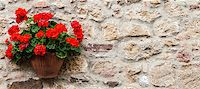 Pienza, Tuscany region, Italy. Old wall with flowers Stock Photo - Royalty-Freenull, Code: 400-07217858