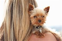 dog and woman and love - Mature woman holding pet dog over shoulder Stock Photo - Premium Royalty-Freenull, Code: 649-07239577