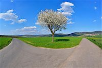 fork - Forked Road with Blossoming Cherry in Spring, Miltenberg, Spessart, Franconia, Bavaria, Germany Stock Photo - Premium Royalty-Freenull, Code: 600-07278730