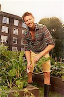 Mid adult man harvesting salad leaf on council estate allotment Stock Photo - Premium Royalty-Freenull, Code: 649-07280541