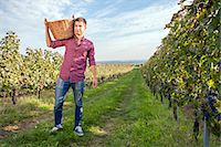 Grape harvest, young man carrying basket, Slavonia, Croatia Stock Photo - Premium Royalty-Freenull, Code: 6115-07282892