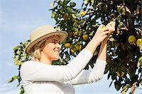 single fruits tree - Young woman picking lemons, Slavonia, Croatia Stock Photo - Premium Royalty-Freenull, Code: 6115-07282912