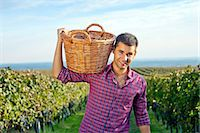 Grape harvest, young man carrying basket with grapes, Slavonia, Croatia Stock Photo - Premium Royalty-Freenull, Code: 6115-07282918