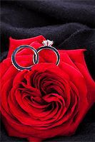 Overhead view of a diamond engagement ring nestling in the heart of a red rose amongst the soft petals Stock Photo - Royalty-Freenull, Code: 400-07305092