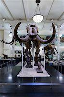 prehistoric - Dinosaur's skeleton of mammoth, American Museum of Natural History, Upper West Side, Manhattan, New York City, New York, USA Stock Photo - Premium Rights-Managednull, Code: 700-07310872