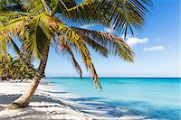 palm - Coconut palm trees and white beach by turquoise clear water, Del Este National Park (Parque Nacional del Este), Dominican Republic, Caribbean Stock Photo - Premium Royalty-Freenull, Code: 600-07311199