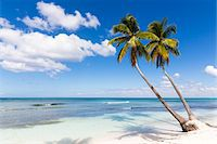 palm - Coconut palm trees and white beach by turquoise clear water, Del Este National Park (Parque Nacional del Este), Dominican Republic, Caribbean Stock Photo - Premium Royalty-Freenull, Code: 600-07311207