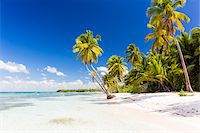 paradise (place of bliss) - Coconut palm trees and white beach by turquoise clear water, Del Este National Park (Parque Nacional del Este), Dominican Republic, Caribbean Stock Photo - Premium Royalty-Freenull, Code: 600-07311210