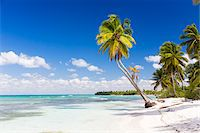 paradise (place of bliss) - Coconut palm trees and white beach by turquoise clear water, Del Este National Park (Parque Nacional del Este), Dominican Republic, Caribbean Stock Photo - Premium Royalty-Freenull, Code: 600-07311211