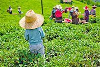 farm and boys - Childhood Stock Photo - Premium Royalty-Freenull, Code: 6106-07349859