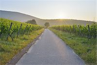 Road in the Vineyard Stock Photo - Premium Royalty-Freenull, Code: 6106-07350334