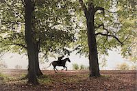 Horse and rider gallop through woodland Stock Photo - Premium Royalty-Freenull, Code: 6106-07350349
