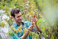 single fruits tree - An organic flower plant nursery. A man working, tending the plants. Stock Photo - Premium Royalty-Freenull, Code: 6118-07351253