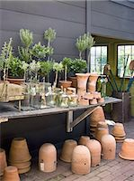 potted plant - A group of clay pots with cuttings and seedlings for overwintering. Stock Photo - Premium Royalty-Freenull, Code: 6118-07351966