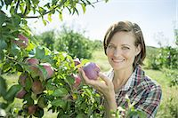 A woman in a plaid shirt picking apples from a laden bough of a fruit tree in the orchard at an organic fruit farm. Stock Photo - Premium Royalty-Freenull, Code: 6118-07353011