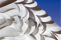 feather  close-up - Snow goose wing feathers, Chen caerulescens, California Stock Photo - Premium Royalty-Freenull, Code: 6118-07353163