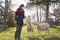 domestic sheep - A woman in a pen wit