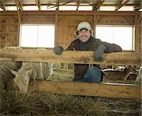 An Organic Farm in Winter in Cold Spring, New York State. A family working caring for the livestock. Farmer and sheep in a pen. Stock Photo - Premium Royalty-Freenull, Code: 6118-07354440