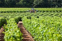 Vine tractor crop-spraying vines in a vineyard at Parnay, Loire Valley, France Stock Photo - Premium Rights-Managednull, Code: 841-07354899