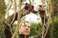 Gardener Pruning Tree Stock Photo - Premium Rights-Managednull, Code: 822-07355630