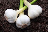 Garlic Stock Photo - Premium Rights-Managednull, Code: 859-07356243
