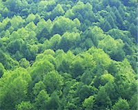 sprout - Forest from above, Fukushima Prefecture Stock Photo - Premium Rights-Managednull, Code: 859-07356246