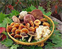 fungus - Assorted mushrooms Stock Photo - Premium Rights-Managed, Artist: Aflo Relax, Code: 859-07356447