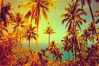View of nice tropical background with coconut palms. Thailand Stock Photo - Royalty-Freenull, Code: 400-07410515