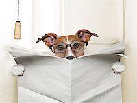 dog sitting on toilet and reading magazine Stock Photo - Royalty-Freenull, Code: 400-07417563