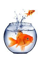 goldfish jumping out of the water Stock Photo - Royalty-Free, Artist: mikdam, Code: 400-07424707