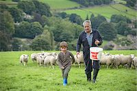farming (raising livestock) - Mature farmer and grandson feeding sheep in field Stock Photo - Premium Royalty-Freenull, Code: 649-07437085
